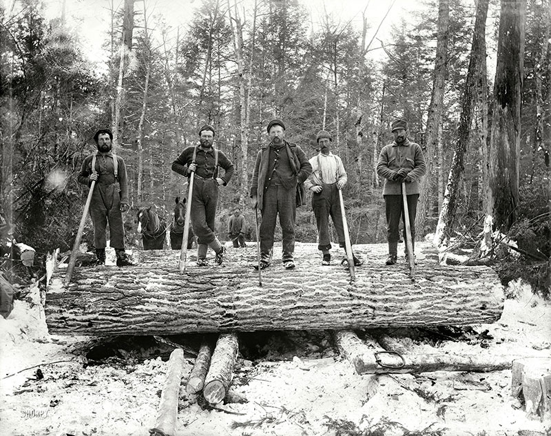 Historical photo of loggers standing on felled trees